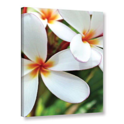Brushstone White Plumeria Gallery Wrapped Canvas Wall Art