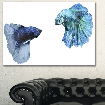 Designart Fighting Fish Animal Canvas Art Print -3 Panels