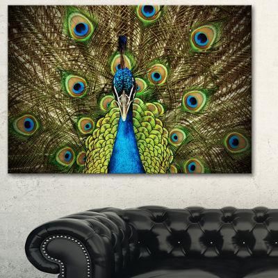 Designart Grand Peacock Animal Photography Art - 3Panels
