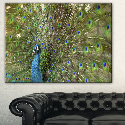 Designart Beautiful Peacock With Feathers Animal Canvas Art Print - 3 Panels