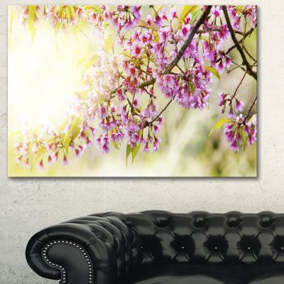 Designart Blooming Cherry Flowers Floral Photography Art - 3 Panels