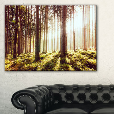 Design Art Early Morning Shadows Of Forest Canvas Art Print