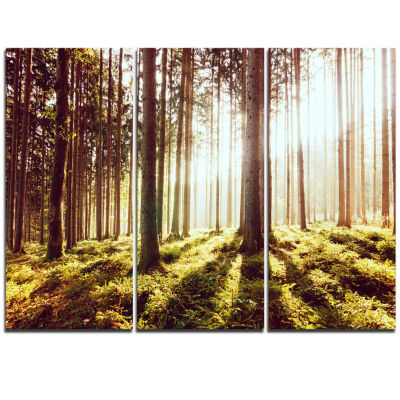 Designart Early Morning Shadows Of Forest Canvas Art Print - 3 Panels