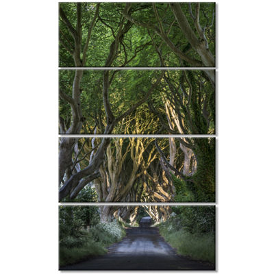 Designart The Dark Hedges Landscape Photography Canvas Art Print - 4 Panels