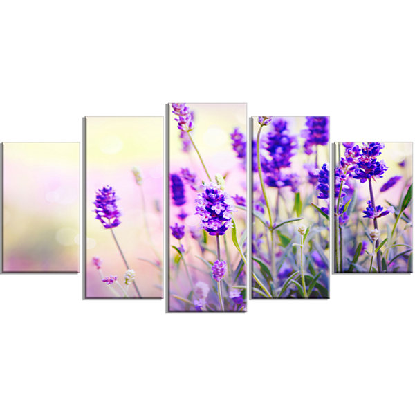 Design Art Purple Lavender Field Floral (373) Photography Canvas Art Print - 5 Panels
