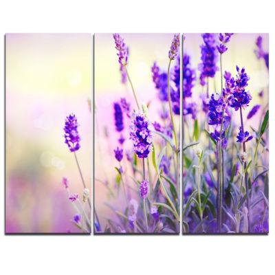 Designart Purple Lavender Field Floral PhotographyCanvas Art Print - 3 Panels