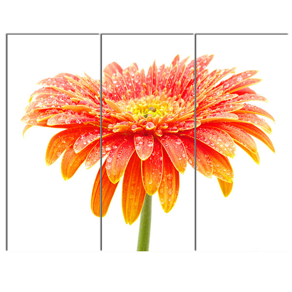 Design Art Orange Gerbera On White Floral Canvas Art Print - 3 Panels