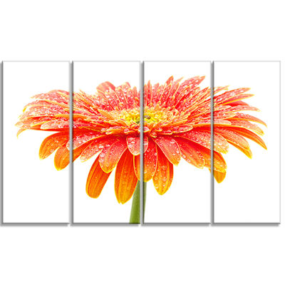 Designart Orange Gerbera On White Floral Canvas Art Print - 4 Panels