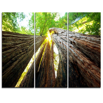 Designart Sequoia Tree Photography Canvas Art Print - 3 Panels