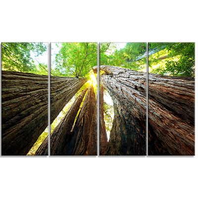 Designart Sequoia Tree Photography Canvas Art Print - 4 Panels