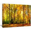 Design Art Gorgeous Autumn Of Sunny Forest Landscape Photography Canvas Print