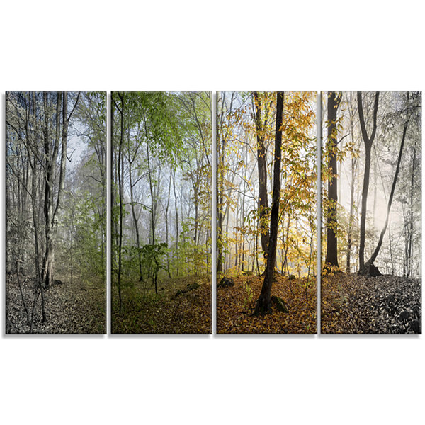 Design Art Morning Forest Panoramic View LandscapePhotography Canvas Print - 4 Panels