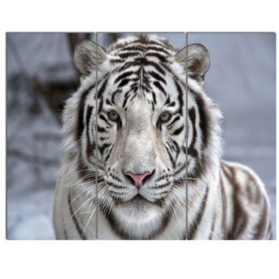 Design Art Face To Face White Bengal Tiger Abstract Canvas Art Print - 3 Panels