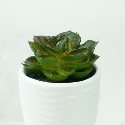 "4.5"" Decorative Dark Green Echeveria Succulent Plant in White Pot"""