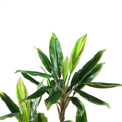 """55.25"""" Decorative Potted Artificial Two Tone Greenand Red Dracaena Plant"""""""