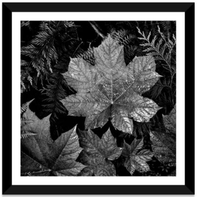 In Glacier National Park XXIII by Ansel Adams Black Framed Fine Art Paper Print