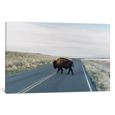 Buffalo Bison by Chelsea Victoria Canvas Print