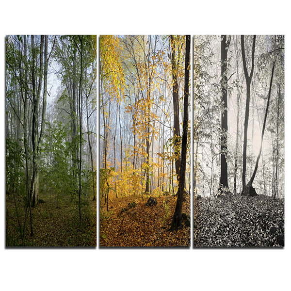 Designart Forest In Early Morning Landscape Photography Canvas Print - 3 Panels