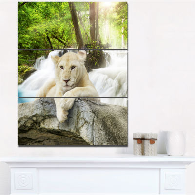 Designart White Lion Animal Canvas Art Print - 3 Panels