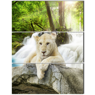 Designart White Lion Animal Canvas Art Print - 3Panels