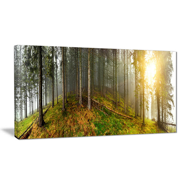 Designart Early Morning Sun In Forest Landscape Photography Canvas Print