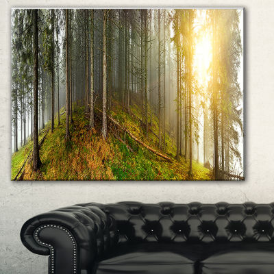 Designart Early Morning Sun In Forest Landscape Photography Canvas Print - 3 Panels