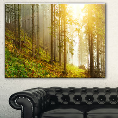 Designart Sun Finds Its Way In Forest Landscape Photography Canvas Print - 3 Panels