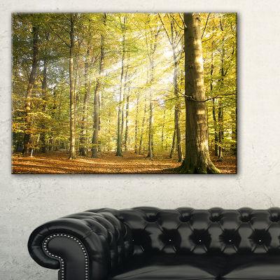 Designart Sun Rays Hitting Forest Landscape Photography Canvas Print - 3 Panels