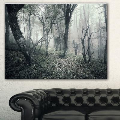 Design Art Vintage Forest Filled With Fog LandscapePhotography Canvas Print