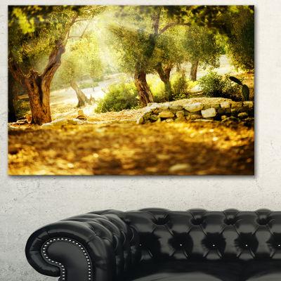 Designart Olive Trees Photography Canvas Art Print