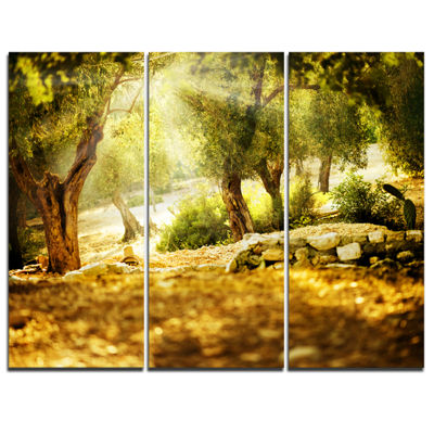 Designart Olive Trees Photography Canvas Art Print- 3 Panels