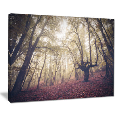 Designart High Rise Trees In Forest Landscape Photography Canvas Print