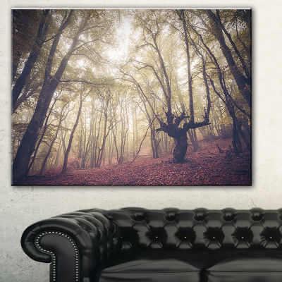 Design Art High Rise Trees In Forest Landscape Photography Canvas Print