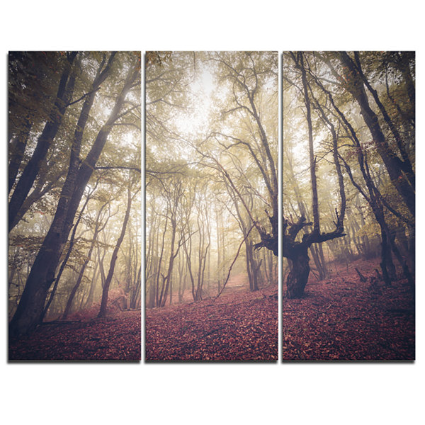 Designart High Rise Trees In Forest Landscape Photography Canvas Print - 3 Panels