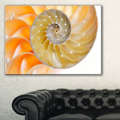 Designart Isolated Nautilus Shell Abstract CanvasArt Print - 3 Panels