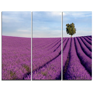 Designart Lavender Field With Solitary Tree Landscape Photography Canvas Print - 3 Panels