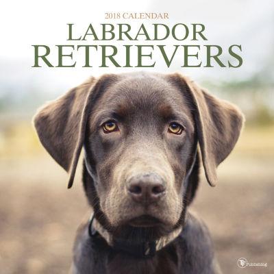 2018 Labrador Retriever Wall Calendar