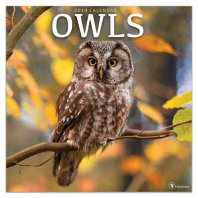 Tf Publishing 2019 Owls Wall Calendar