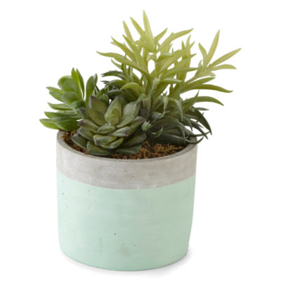 JCPenney Home Succulent Mint Pot