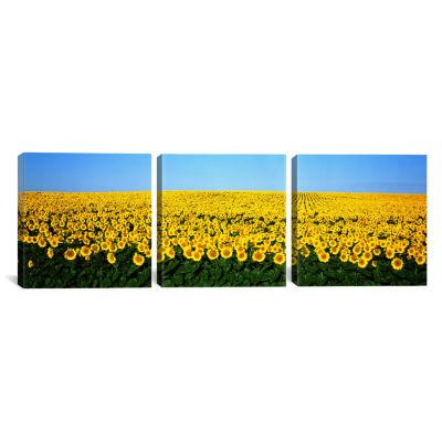 Sunflower FieldNorth Dakota; USA by Panoramic Images Canvas Print