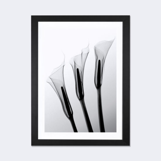 Callas I by Hong Pham Black Framed Fine Art PaperPrint