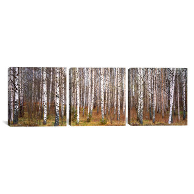 Silver birch trees in a forestNarke; Sweden by Panoramic Images Canvas Print