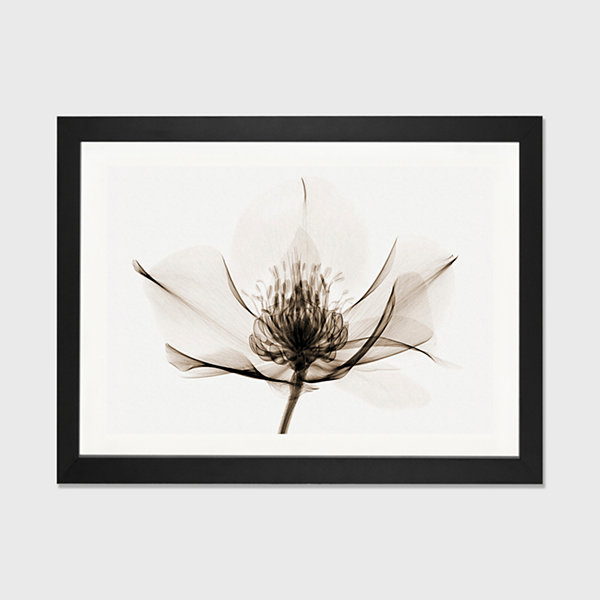 Hellebore I by Robert Coop Black Framed Fine Art Paper Print