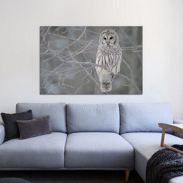 Barred Owl on Branches Canvas Print