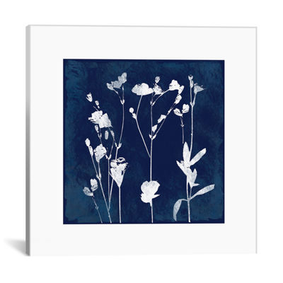 Cyanotype Botanical I by Carol Robinson Canvas Print