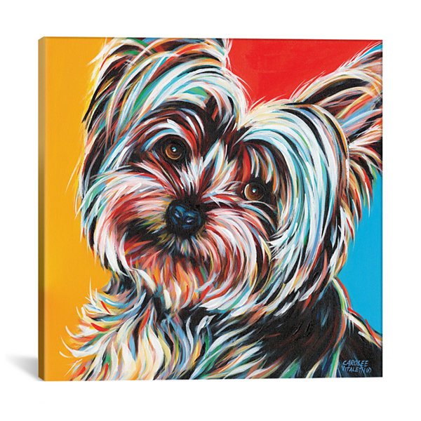 Sweet Yorkie II by Carolee Vitaletti Canvas Print