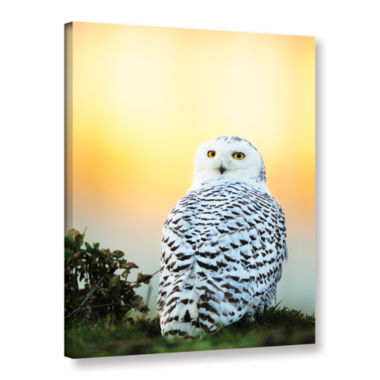 Brushstone Snowy Owl Sunset Gallery Wrapped CanvasWall Art