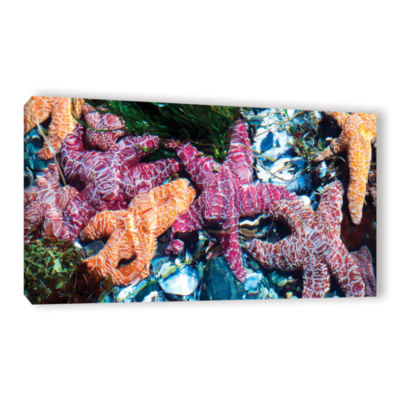 Brushstone Seastar Pano Gallery Wrapped Canvas Wall Art
