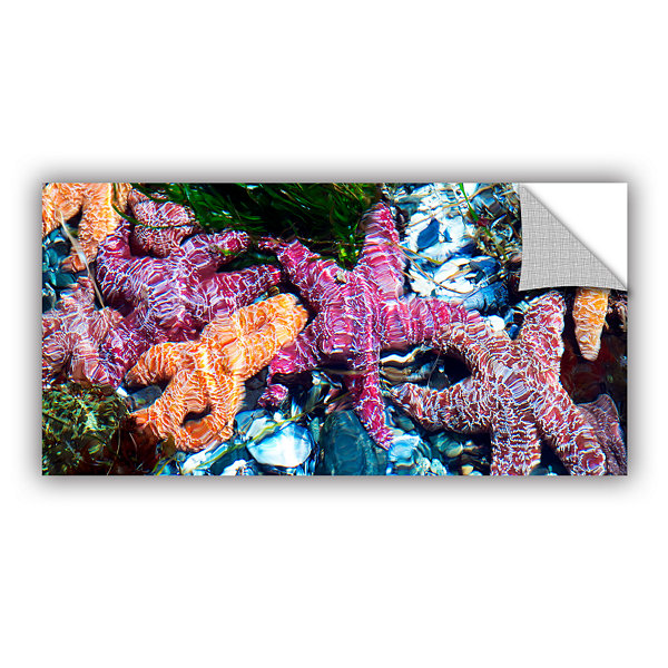 Brushstone Seastar Pano Removable Wall Decal