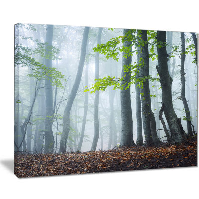 Designart Green Leaves In Old Forest Landscape Photography Canvas Print